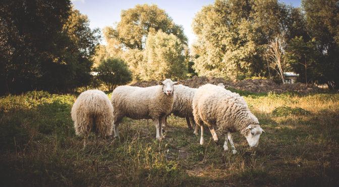 Hol dir bis zu € 1.000,- Förderung für deine landwirtschaftliche Website